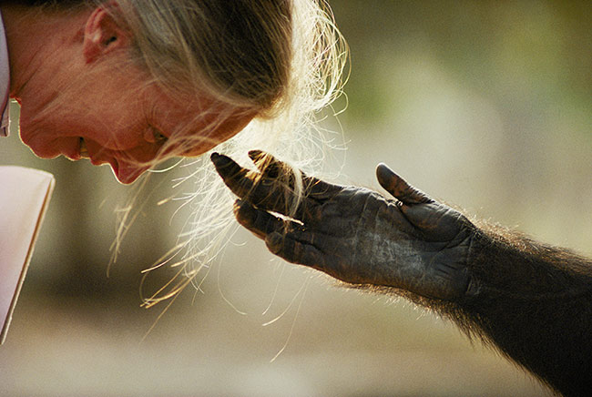 Jane with Jou Jou, Brazzaville Zoo, Republic of the Congo, 1990