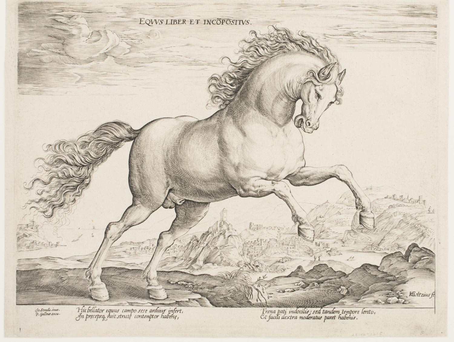 A Free and Untamed Horse