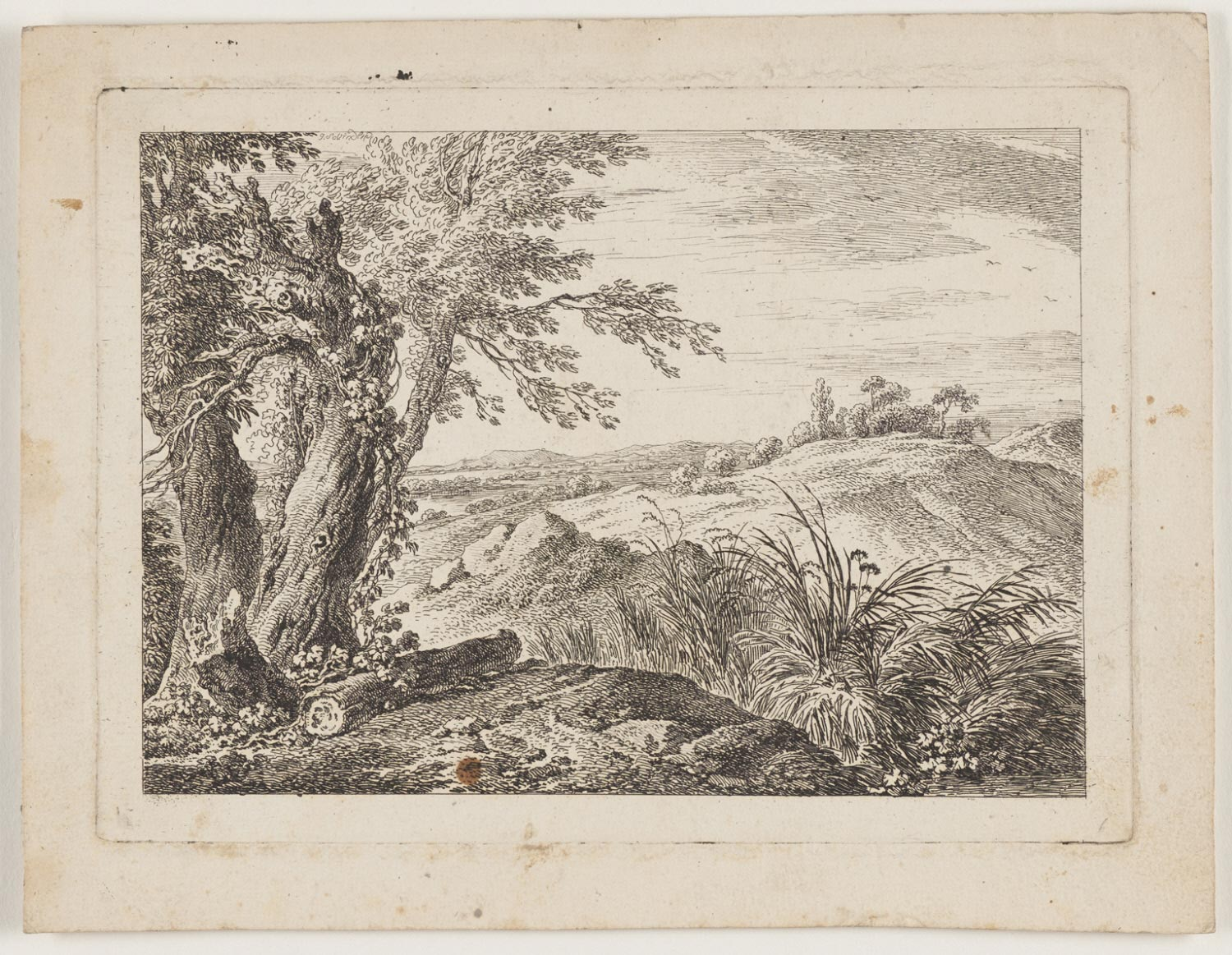 Log and Tree in Foreground, Fields Beyond