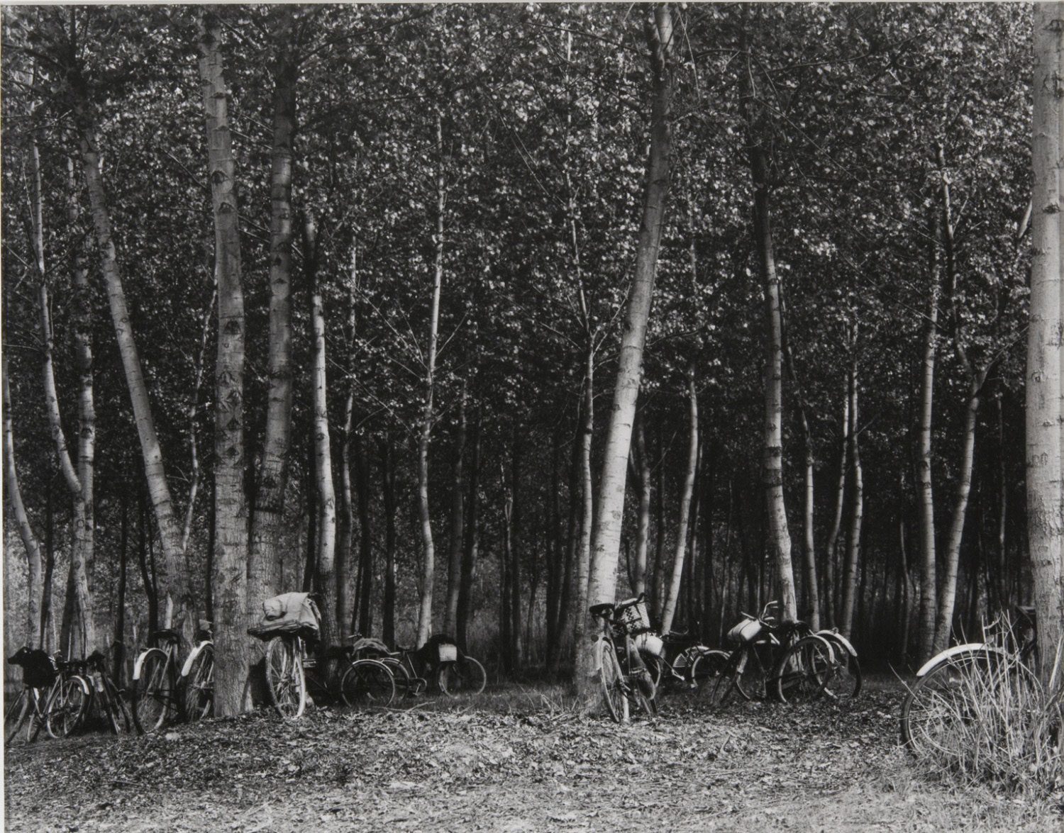 Workers' Bicycles, The Po, Luzzara