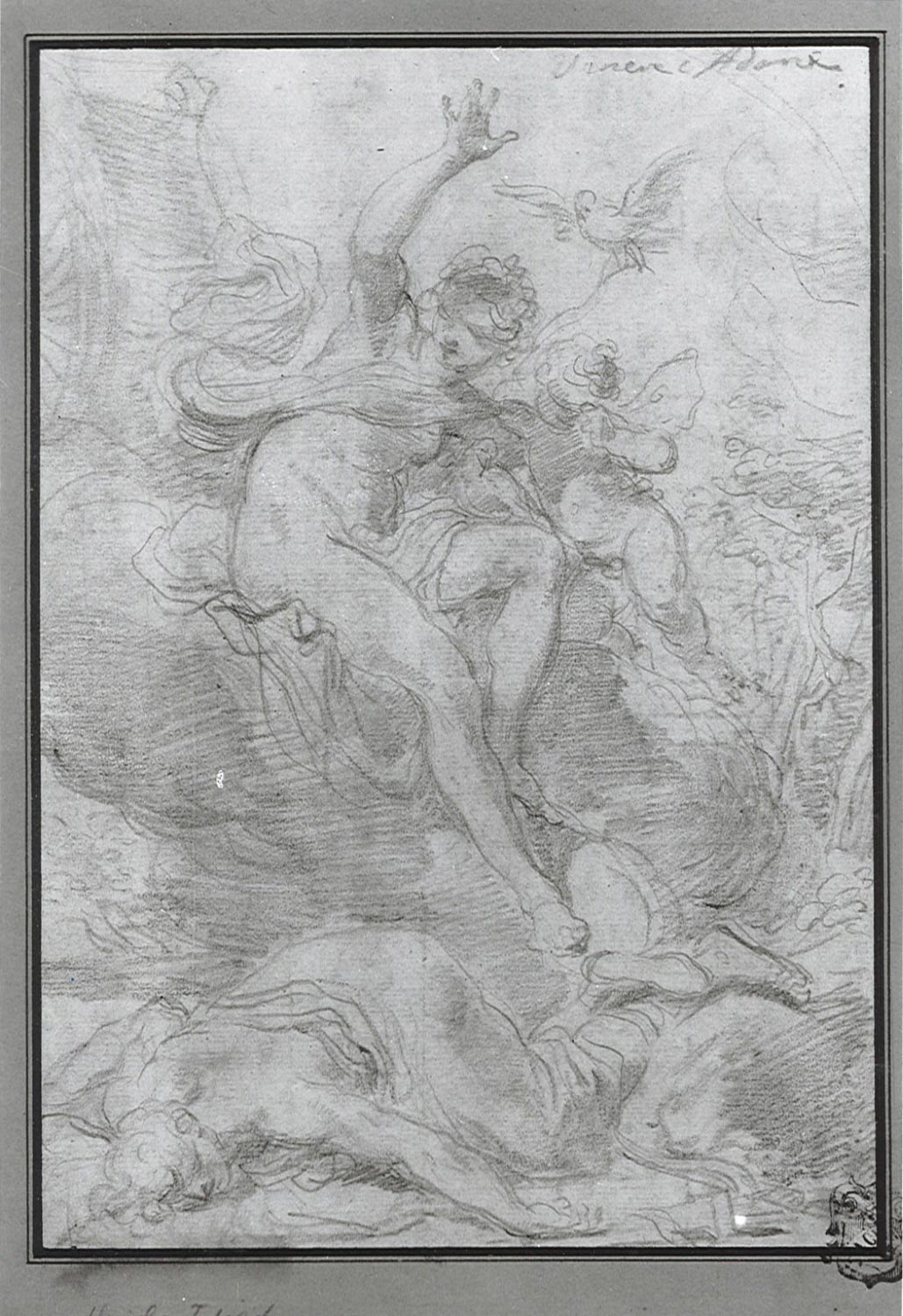Venus Discovering the Dead Adonis