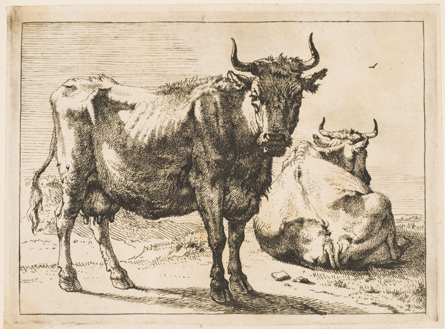 A Cow Standing and Another Lying Down