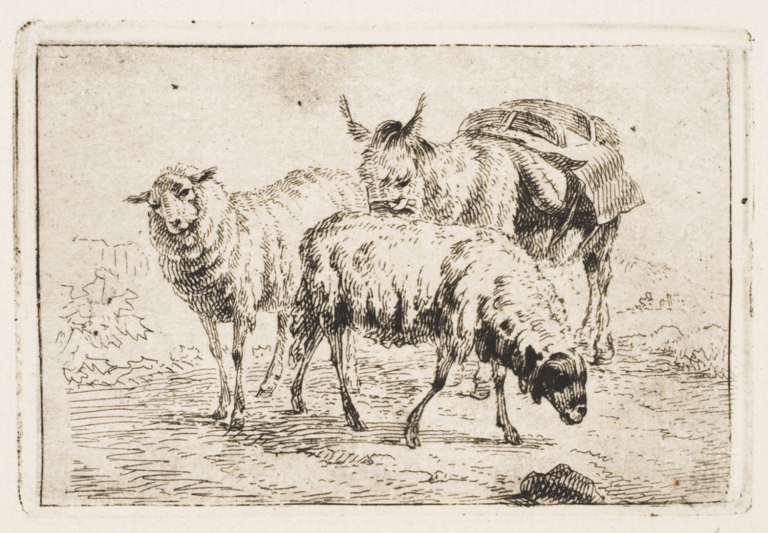 A Donkey and Two Sheep