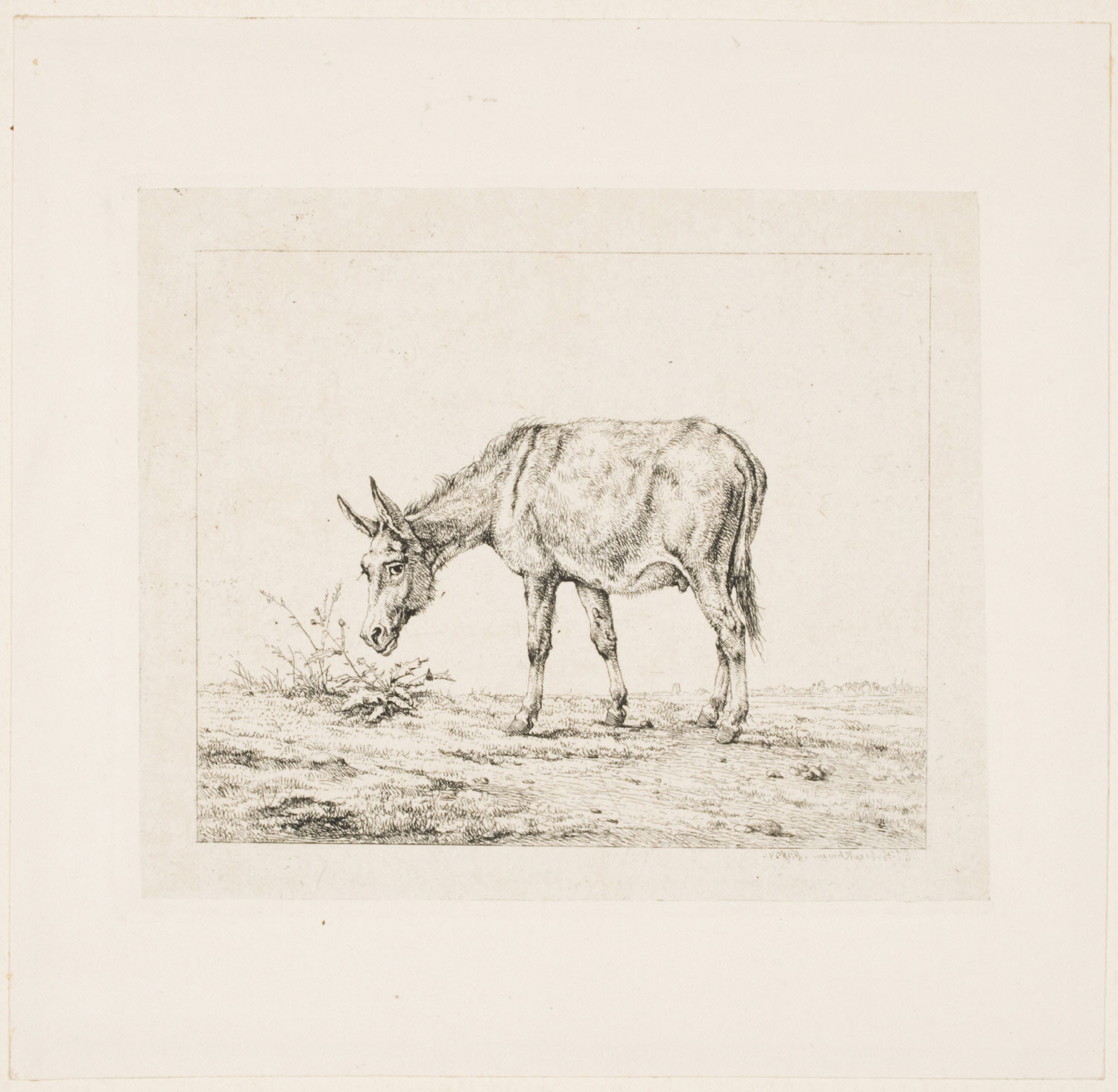 A Donkey, Facing Left