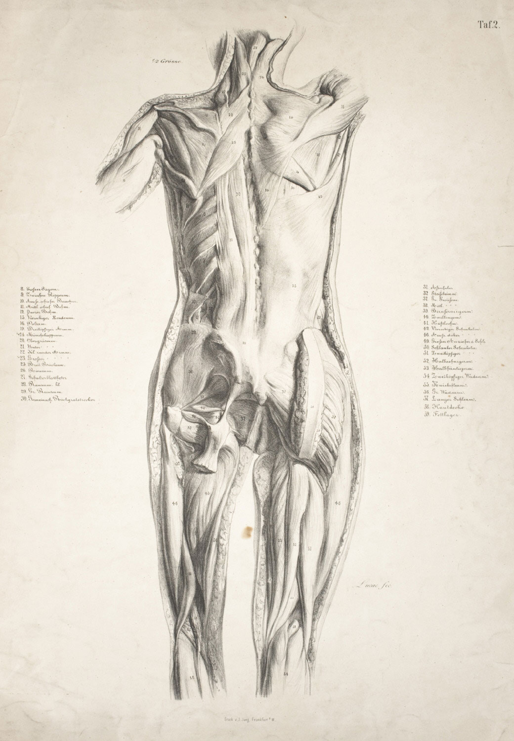 Anatomical Study, Rear View
