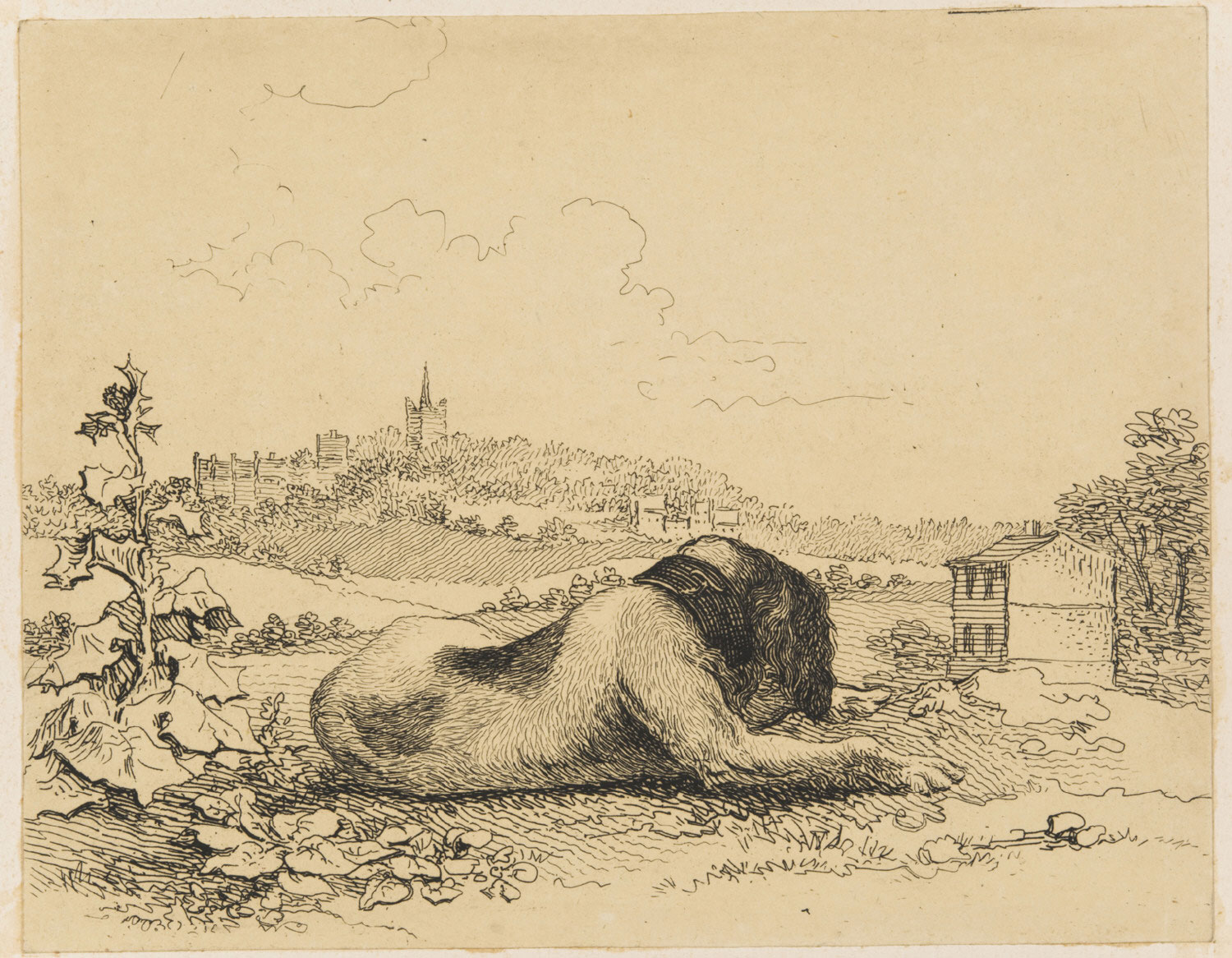 English Water Dog Resting, with a Town in the Distance