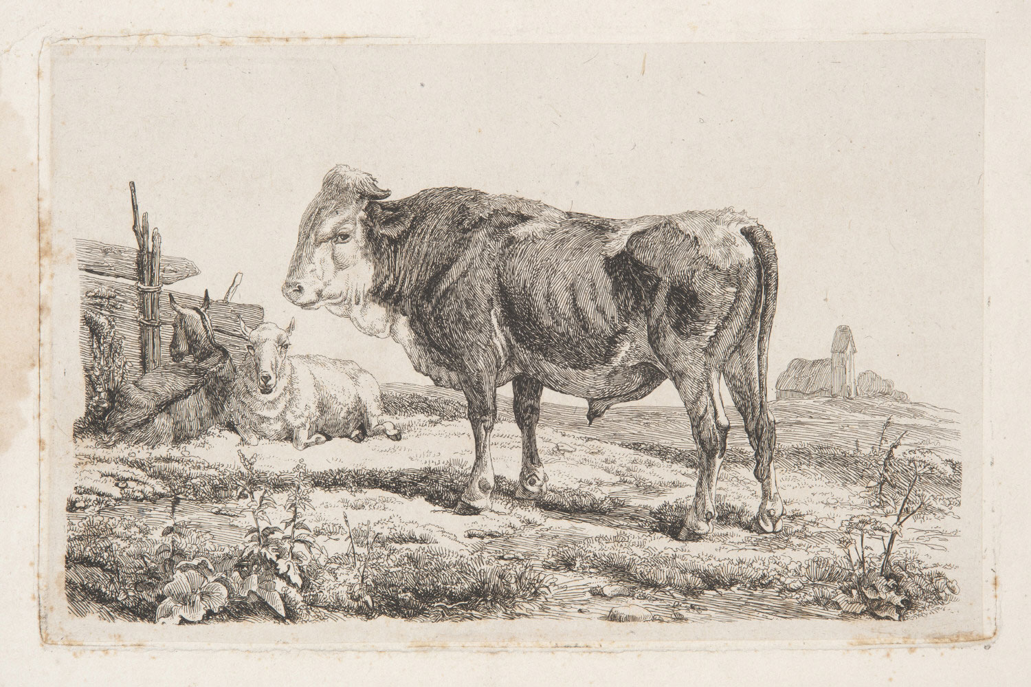 Bull with Two Sheep