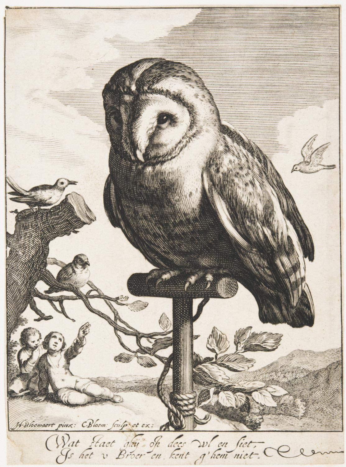 A Captive Owl Tied to a Perch
