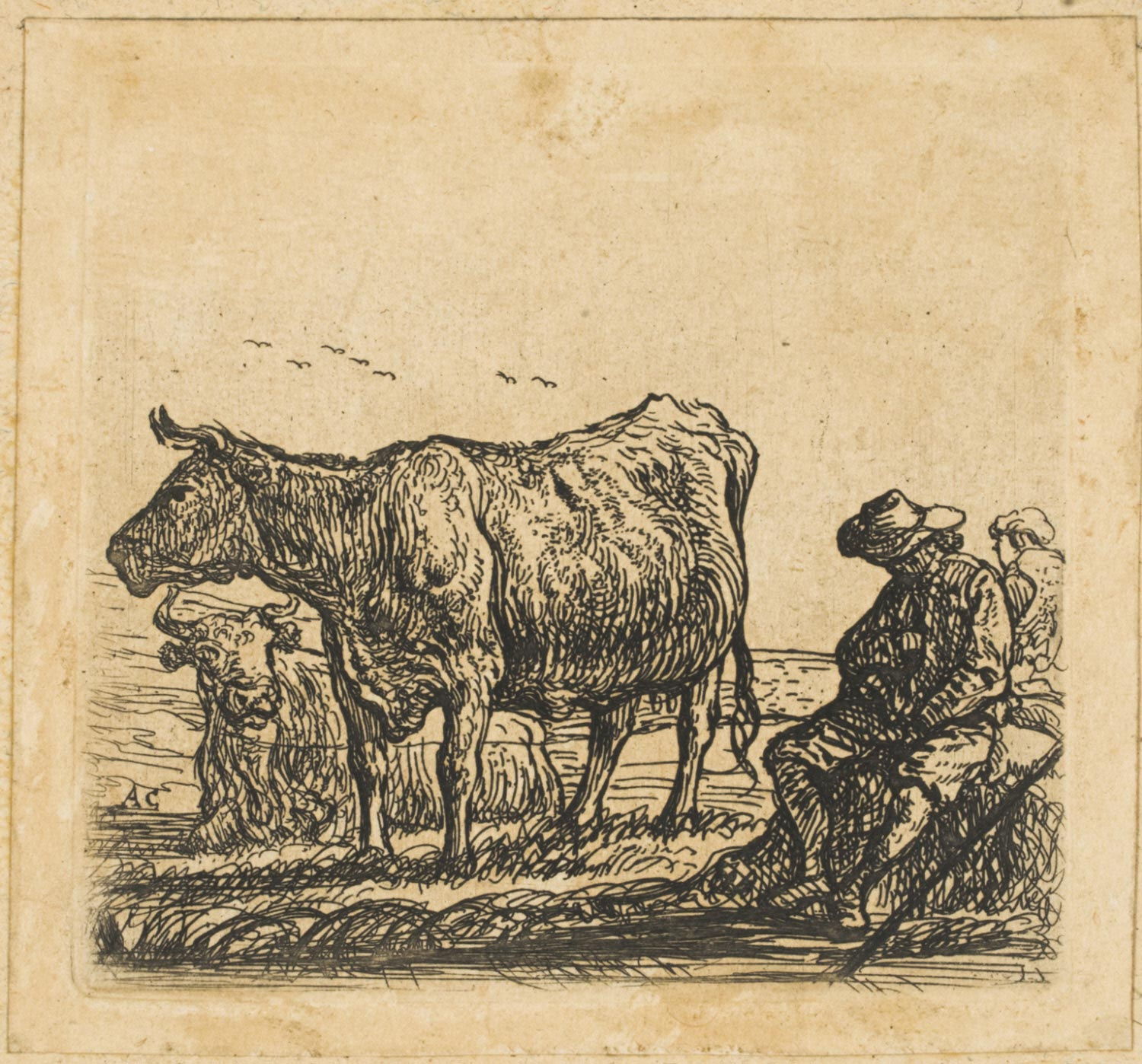 Two Cows and Two Men