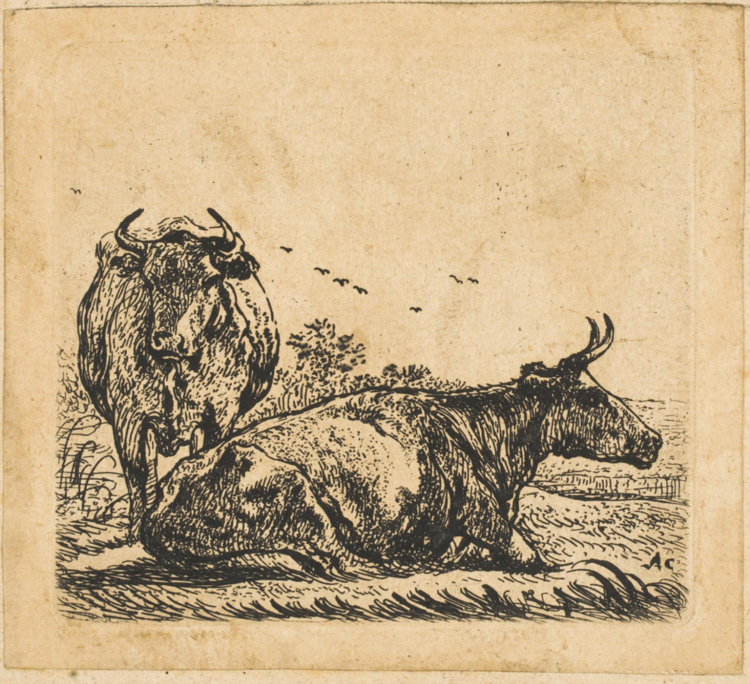 Recumbent Cow and Standing Cow