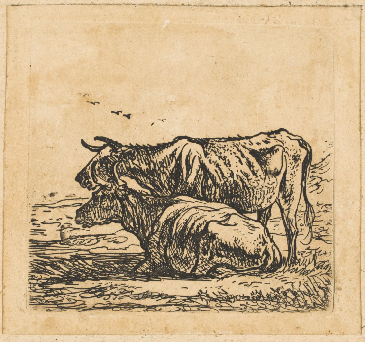 Standing Cow and Recumbent Cow