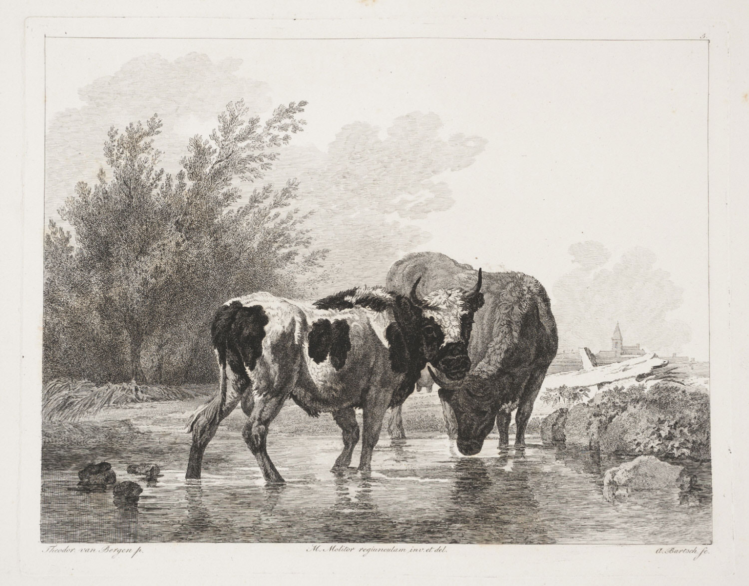 Bull and Cow in a Stream
