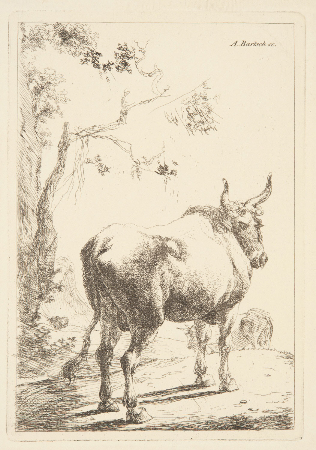 Bull Seen from Behind