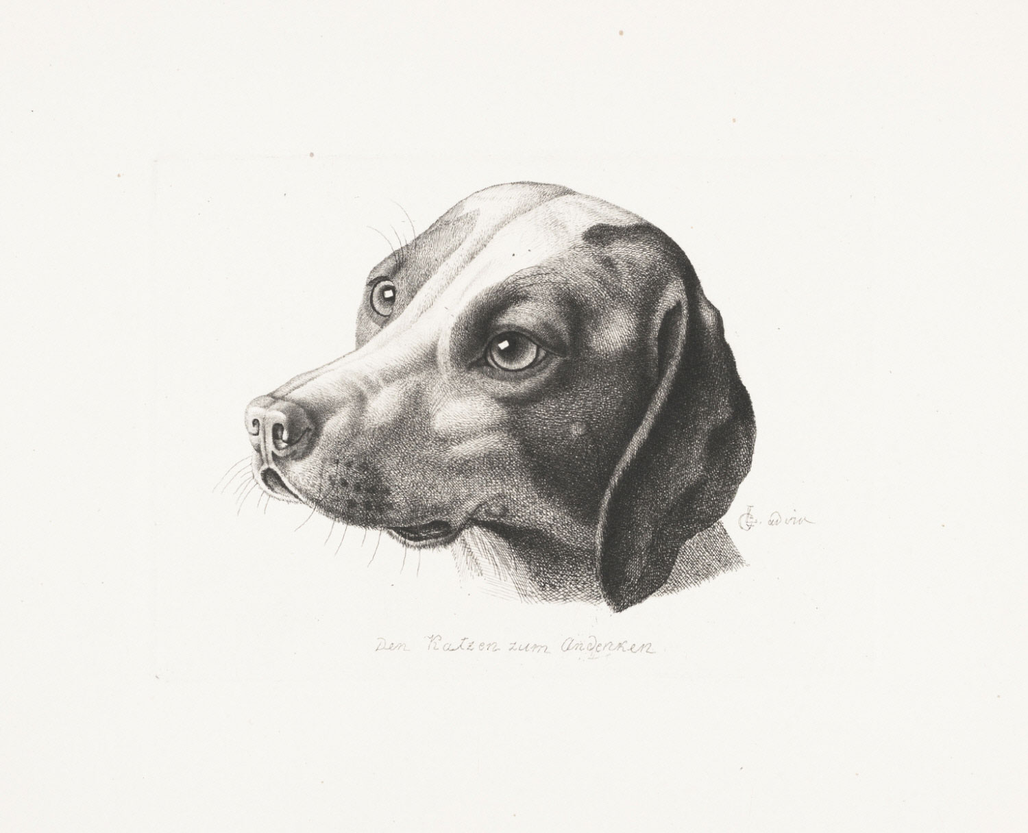 A Dog (In Remembrance of the Cats)