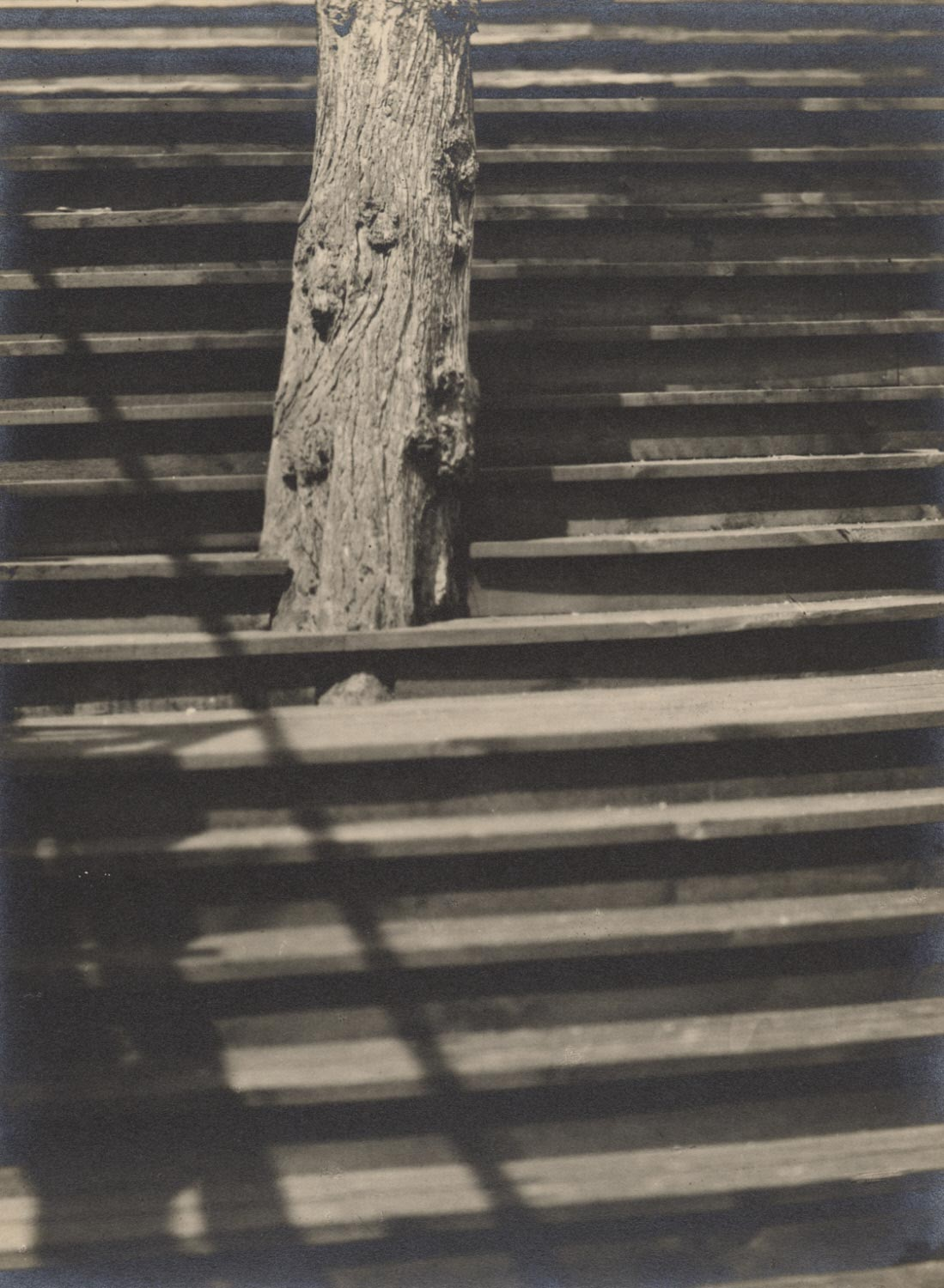 Untitled (Steps and Tree Trunk)