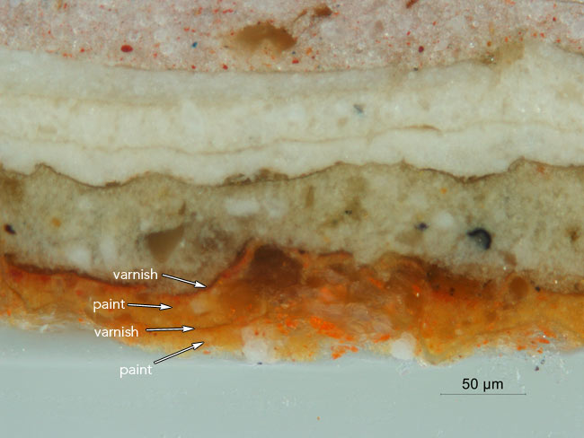 Photomicrograph of the early graining layers in cross-section